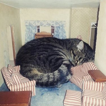 cat cramped between dollhouse couches