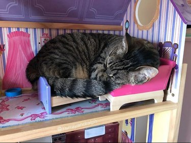cat sleeping on dollhouse bed