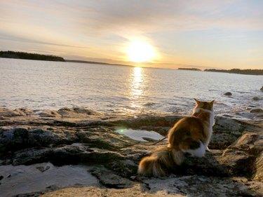 Cat watching the sunrise