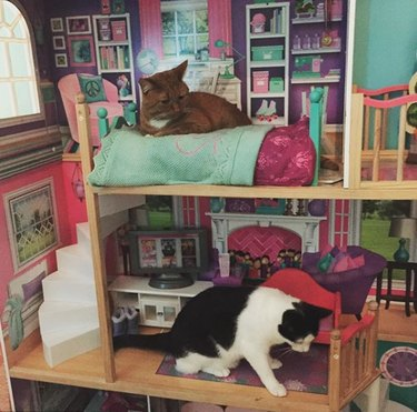 two cats inside dollhouse
