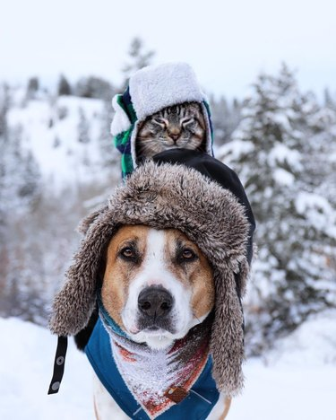 Dog and cat wearing snow hats