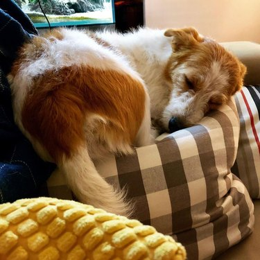 a dog on a giant pillow