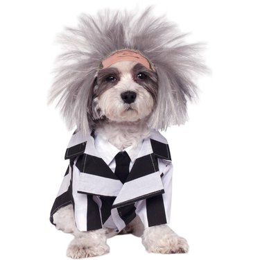 Beetlejuice Halloween costume for dogs