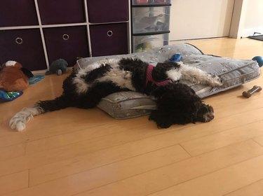 a dog sleeping on a dog bed and floor