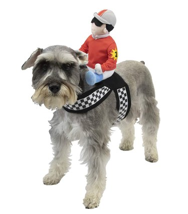 Horse jockey Halloween costume for dogs