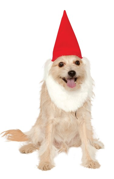 Garden gnome  Halloween costume for dogs