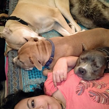 three dogs napping with owner