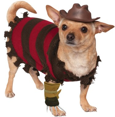 Freddy Krueger Halloween costume for dogs
