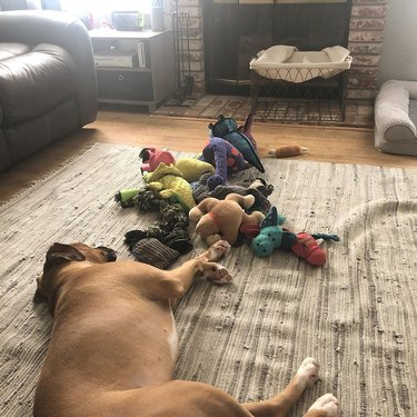 a dog napping with toys