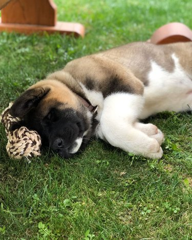 a dog sleeping on grass