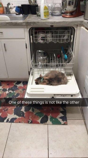 Cat sleeping on open dishwasher door