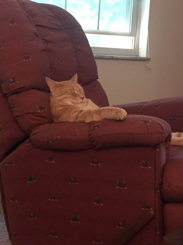 Cat sleeping sitting up in chair like a people