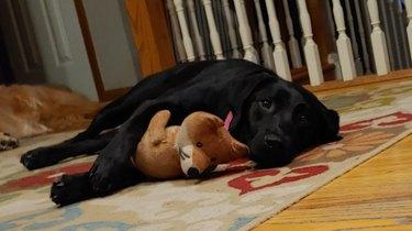 dog cuddled with stuffed toy fox