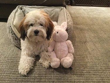 dog sits with stuffed bunny