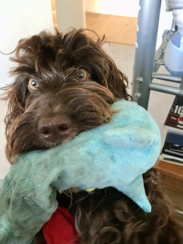 dog and blue dragon