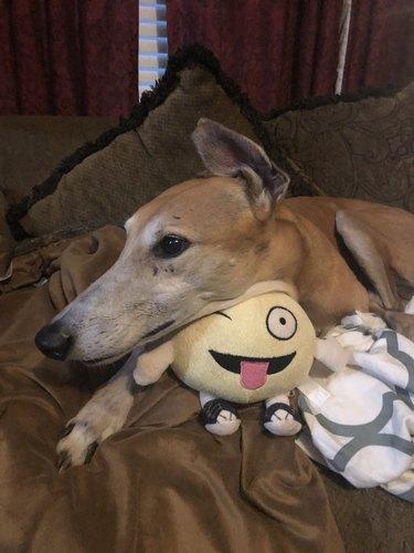 dog cuddles with plush emoji thing