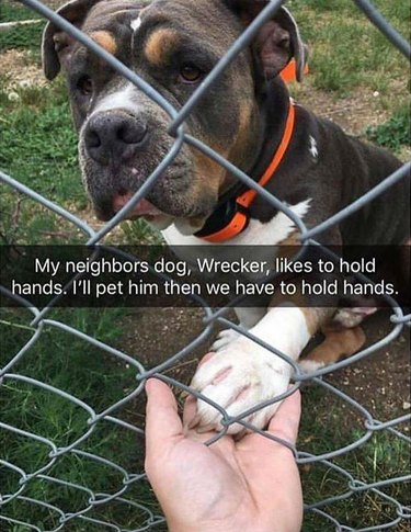 dog named Wrecker behind a fence holding a person's hand