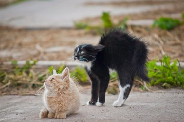 Startled cats