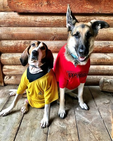 Star Trek-inspired names for male and female dogs and puppies