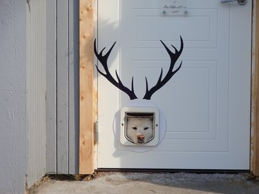 Dog sticking his head through a doggy door and there are antlers painted on the door!