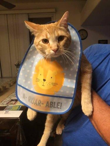 cat wearing A-Roar-Able baby bib