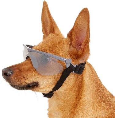 dog wearing rubber framed optix dog sunglasses