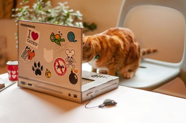 ginger cat mesmerized by fake laptop scratchpad