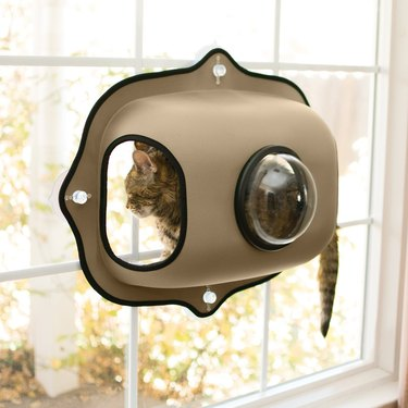 cat sits in bubble pod attached to window