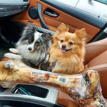 two dogs with a dinosaur bone
