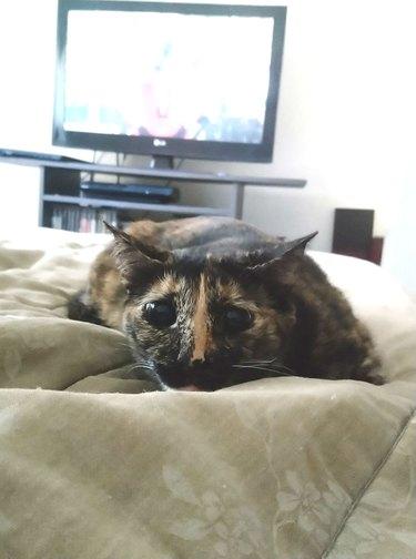 cat named Batata