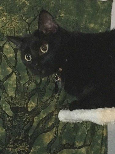 cat named Morloth