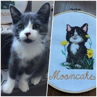 cat named Mooncake