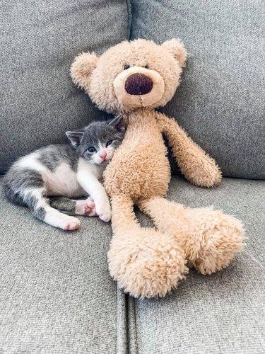 cat named Mr. Tiny Pants