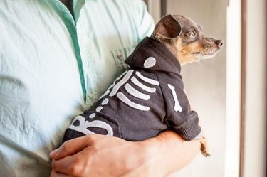 Dog skeleton sweater