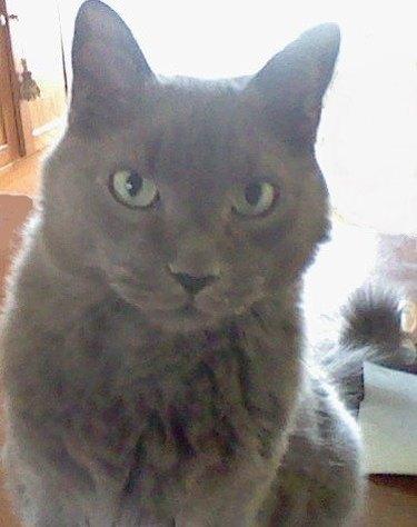cat named Sam Handwich