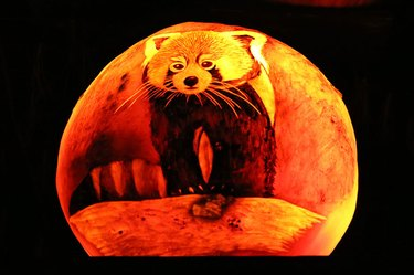 Jack'o'lantern with a red panda carved into it..