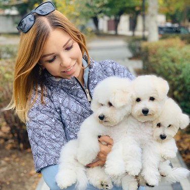three bichon frises with owner