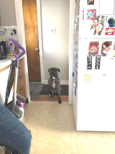 dog not allowed in kitchen inches slowly into kitchen