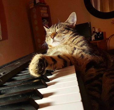 content cat lying on piano
