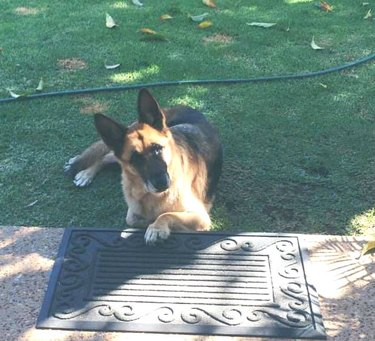 dog cheats no patio rule by putting one paw up
