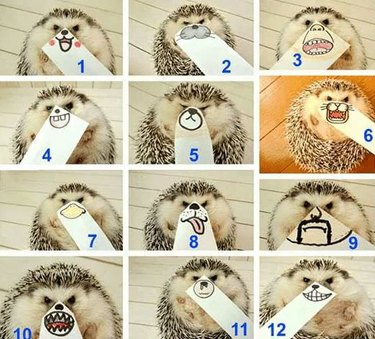 Hedgehog with drawings of different mouths held up to its face.