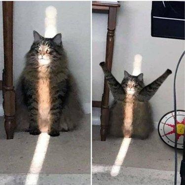 cat basks in sunbeam