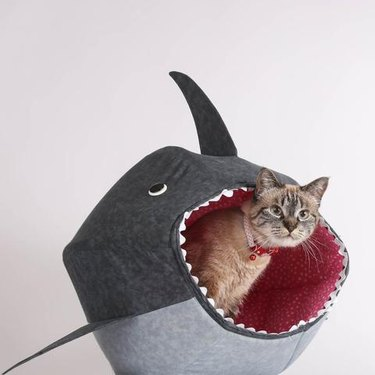 cat peers out of bed shaped like a great white shark