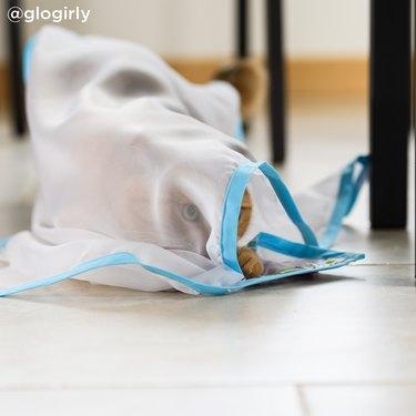 sheer fun drape toy for cats