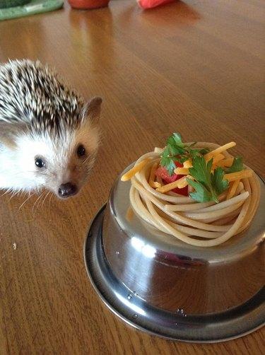 Hedgehog next to a tiny plate of pasta.
