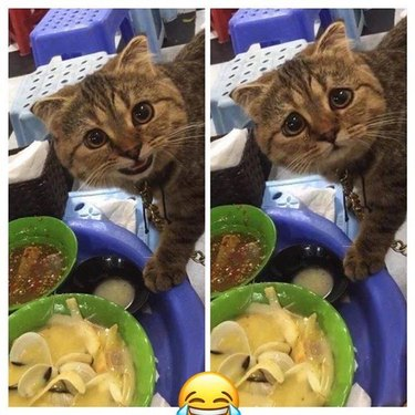 cat caught taking food from plate