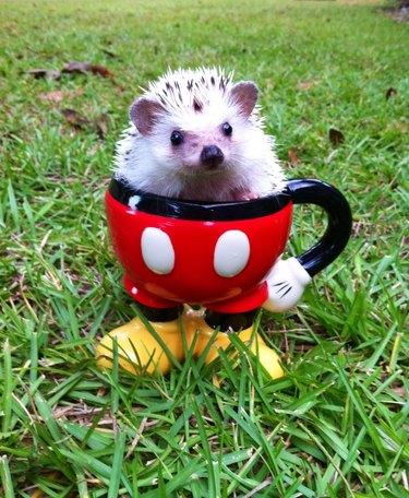 Hedgehog sitting in a mug shaped like the bottom half of Mickey Mouse.