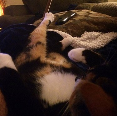 cat stretching to reach for a remote control