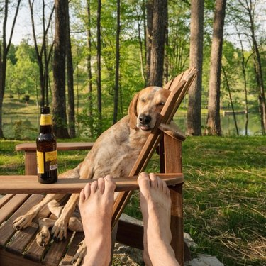 dog leaning into adirondack chair