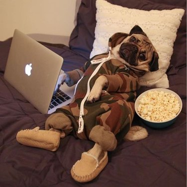 dog in a onesie and slippers with popcorn and a laptop